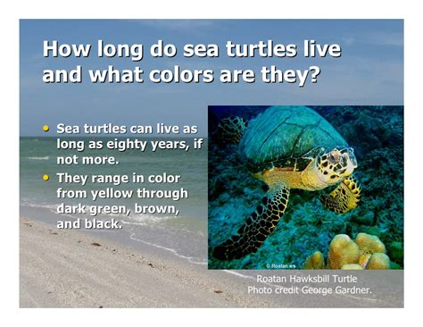 how does a live sea turtle release
