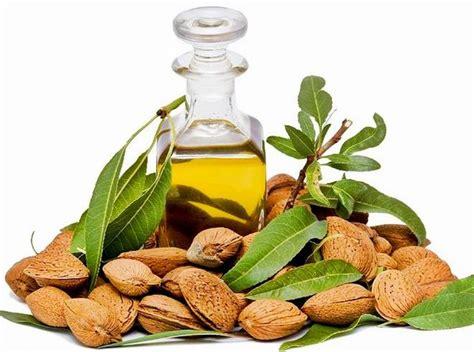 Minyak Almond Untuk Bibir tips herbal sejarah khasiat dan manfaat minyak almond
