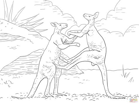 red kangaroo coloring page 301 moved permanently