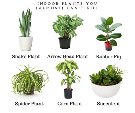 top indoor plants best indoor plants myfavoriteheadache com