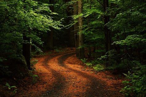 test di bosco test psicologico sentiero dimmi strada scegli e ti