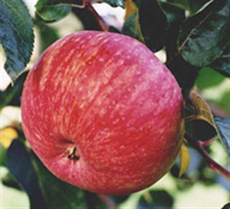 bernwode fruit trees fruit trees historic varieties grown and supplied by
