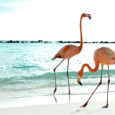 Bfs Big Flamingo flamingos beaches and the on