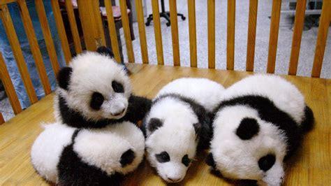 imagenes para fondo de pantalla de ositos osos bebes para tu fondo de pantalla im 225 genes taringa