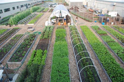 Kingsborough Community College   Urban Farm
