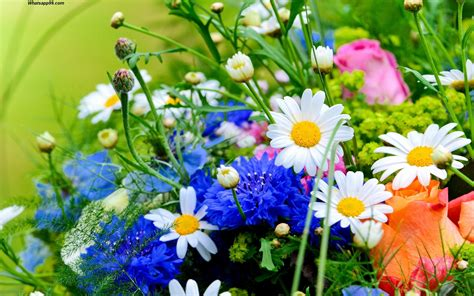 beautiful flowers image world s top 100 beautiful flowers images wallpaper photos
