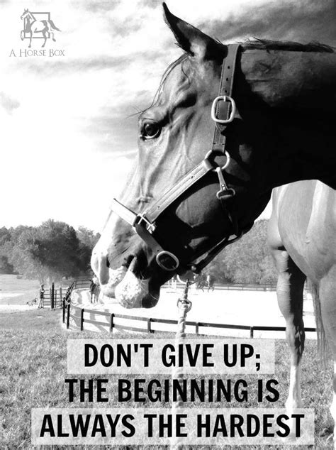 printable horse quotes pin horse riding quotes on pinterest