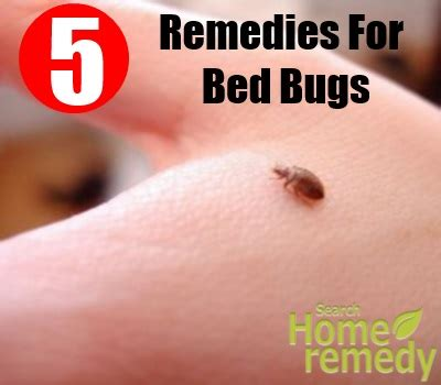remedies for bed bugs 8 home remedies for bed bugs natural treatments cure