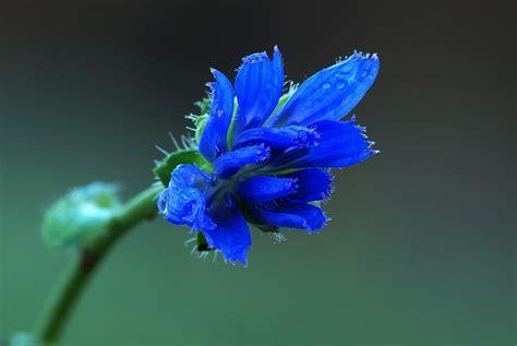 fiore invernale fiore invernale juzaphoto