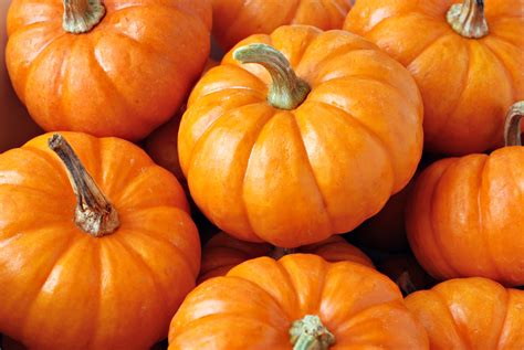 images of pumpkins for stock photos left