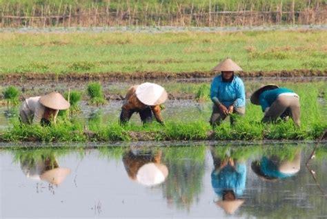 Peramalan Penyakit Tumbuhan waspadai tiga musuh besar petani pada musim tanam ii