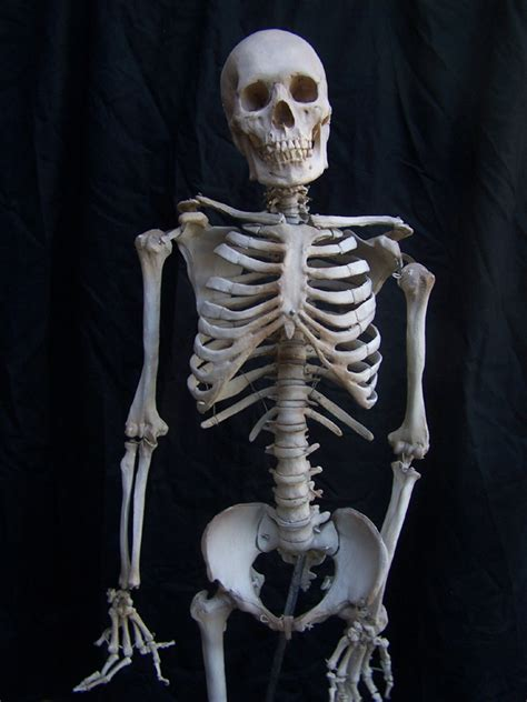 Scary Home Decor by Props For Rent Amp Portfolio Halloween Skeletons And