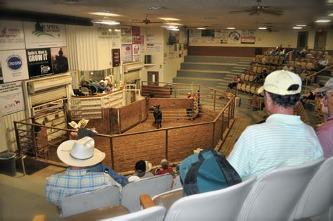 livestock auction home amarillo livestock auction