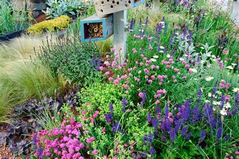 wildflower backyard wildflower garden shady area landscaping pinterest