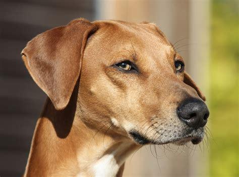 fotos de pitos de nios medianos image gallery perros medianos