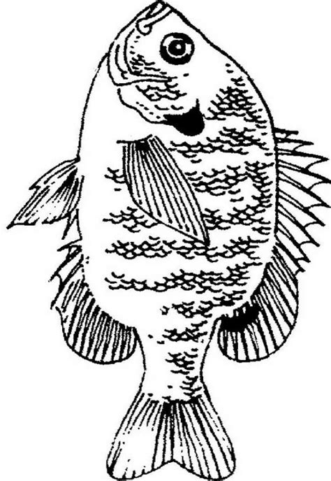 crappie coloring book walleye pages picture grig3 org