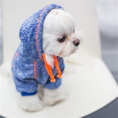 puppy clothing best 25 puppy clothes ideas on puppy chihuahua clothes and