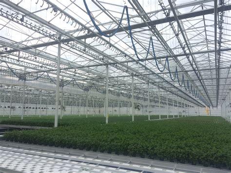 mint green house 100 mint green house green house cbd cbd vape juice