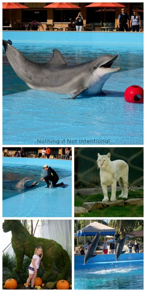 Secret Garden And Dolphin Habitat by Las Vegas With Siegfried And Roy S Secret Garden And