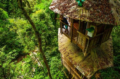 Frank Lloyd Wright Plans For Sale top 7 awesome eco friendly treehouse hotels javi s