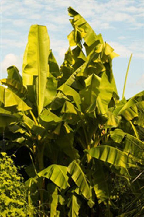 mit exotischen pflanzen setzen sie gezielt akzente im - Exotische Bäume Winterhart
