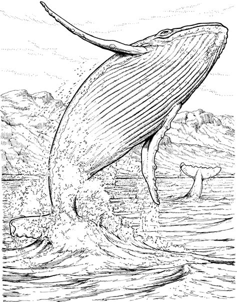 Whale Coloring Pages Humpback Whale Coloring Page