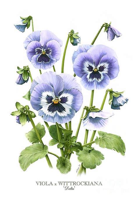 viola pansies painting by artellus artworks