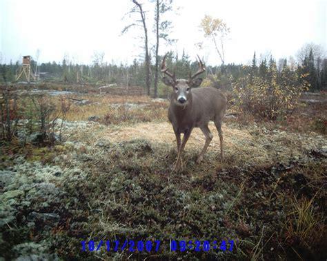 buck canada ontario deer whitetail trophy buck hunt non