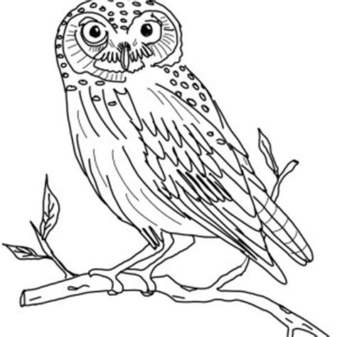 owl moon coloring page texas chainsaw massacre coloring pages coloring pages