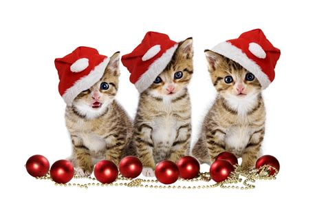 wallpaper cats christmas christmas kitten wallpapers wallpaper cave