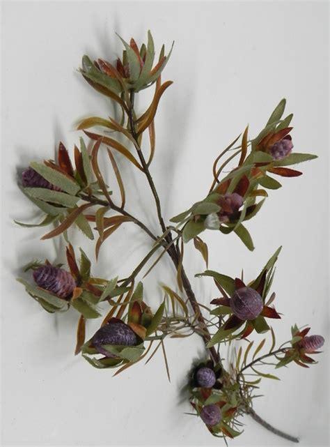 fiori riccione infiorescenza sudafrica fior di loto riccione