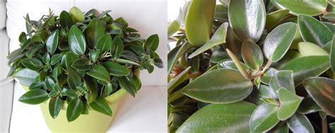 plantes d int 233 rieur indetermin 233 es ou 224 confirmer plantes