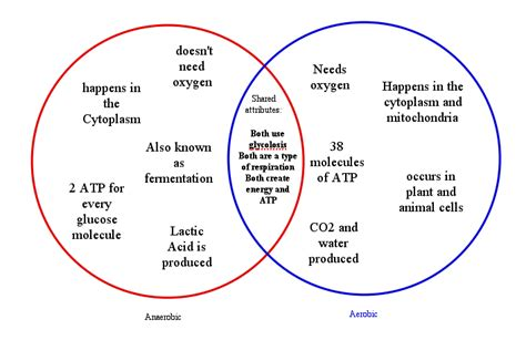 kinetic and potential energy venn diagram 4 best images of venn diagram foldable graphic organizer