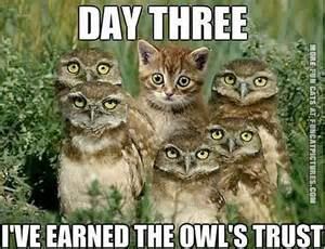 cat with the trust of owls fun cat pictures