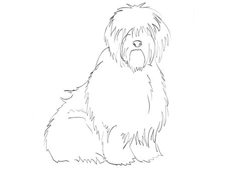 coloring pages of sheep dogs sheepdog coloring page
