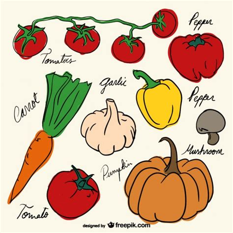 Drawing Vegetables by Vegetables Drawing Decoration Vector Free