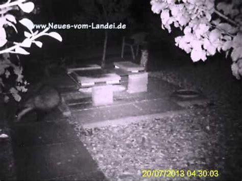 marderspuren im garten nachts im garten unerwartete besucher vor der wildkamera