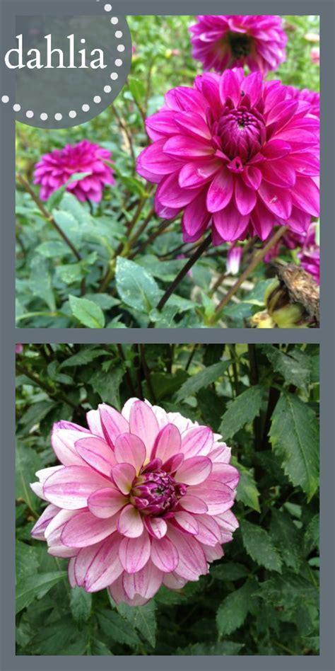 All Season Flower Garden All Season Flower Gardens All Season Flower Garden