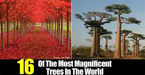 16 of the most magnificent trees in the world bored panda 16 of the most magnificent trees in the world