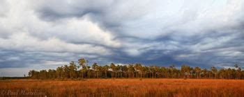 pineland gold a pine island sound mystery books florida panoramas florida florida landscape