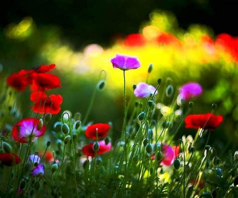 wallpaper flower live flower live wallpaper android apps on google play