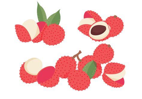lychee vectors   vector art stock graphics