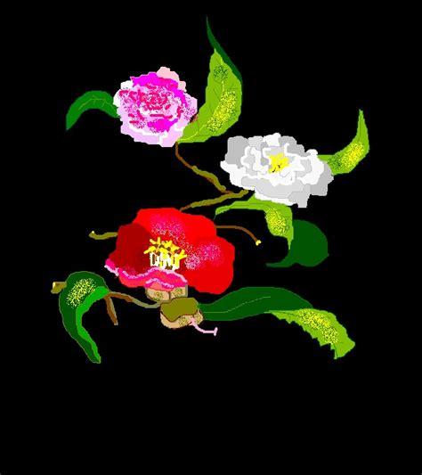linguaggio dei fiori camelia fiori il linguaggio dei fiori