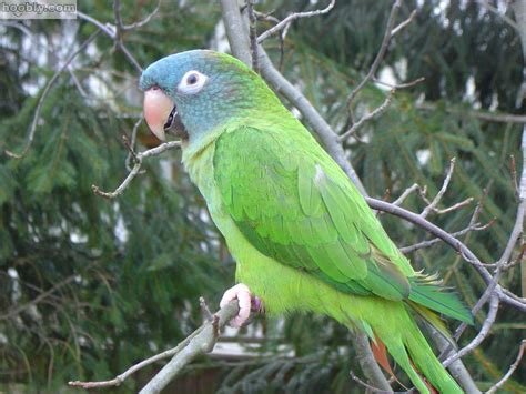 about conure training temperament characteristics