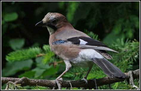 Vogelarten Im Garten heimische vogelarten im garten garten hause dekoration bilder na9y06wdzm