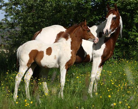 estos caballos inusuales tienen los colores m 225 s bellos taringa
