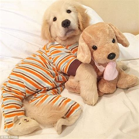 puppies in pajamas 24 puppies in pajamas who couldn t be any cuter