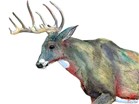 water color animals i draw animal watercolors inspired by my time spent living