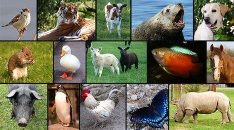 imagenes reino animal lectores contenidos y temas el universo ciencias naturales