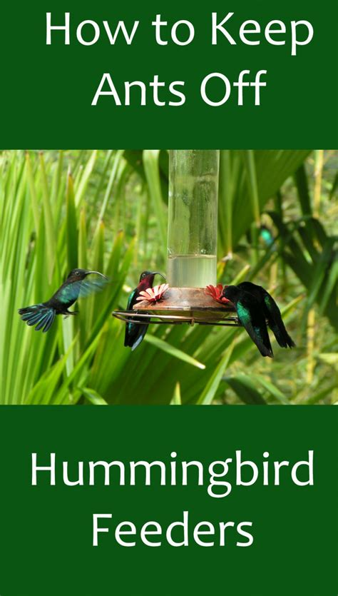 how to prevent ants on hummingbird feeders dengarden